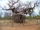 Boab Prison Tree - Derby (Western Australia)
