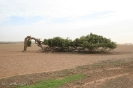 Leaning Tree - Western Australia