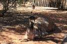 Alice Spings Desert Park
