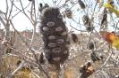 Hawks Head Lookout - Kalbarri National Park