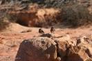Moshroom Rock - Kalbarri National Park