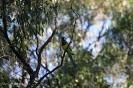 Kings Park - Perth