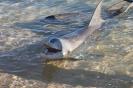 Monkey Mia - Shark Bay