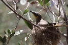 Alice Springs - Alice Springs Desert Park
