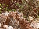 West MacDonnell Range - Simpson Gap