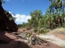 Finke River National Park – Palm Valley