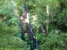 Lamington National Park - Auf dem Walk bei Binna Burra