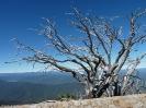The Horn Picnic Area - Mt Buffalo National Park