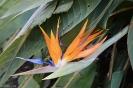 Sydney - Royal Botanic Garden