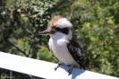Sydney - Taronga Zoo