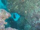Three Finns - Ningaloo Reef