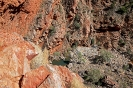 West MacDonnell Ranges - Serpentine Gorge