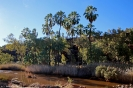 Palm Valley - Finke River National Park
